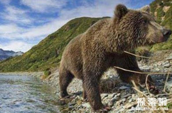 神秘的女兽孩熊女,2岁时失踪,与熊生活14年