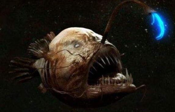让人生畏的十大海洋生物,体长25米抹香鲸排名第一