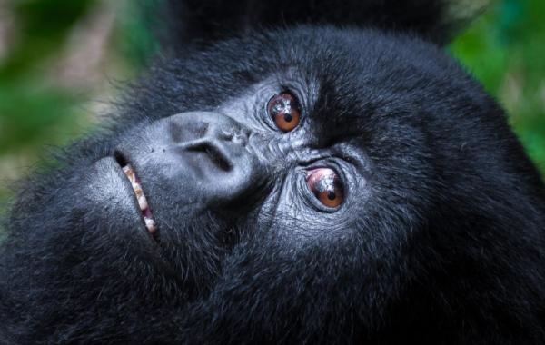 世界上最贵的门票:卢旺达火山公园门票,万元一张且一票难求