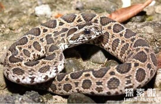 盘点世界十大名蛇,眼镜王蛇与金环蛇上榜