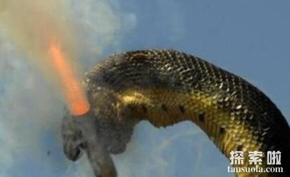 世界上最长的蛇:红海巨蟒,体长500米的深海杀手(鱼雷炸成肉酱)