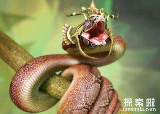 世界上年龄最大的蛇:绿茸线蛇,活了1687岁的蛇中寿星