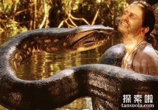 世界上最大的蛇:亚马逊森蚺,体长10米重500公斤(无天敌)