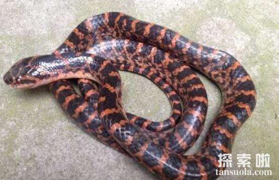 世界上最漂亮的五种蛇排名,全身翠绿的竹叶青蛇排第三