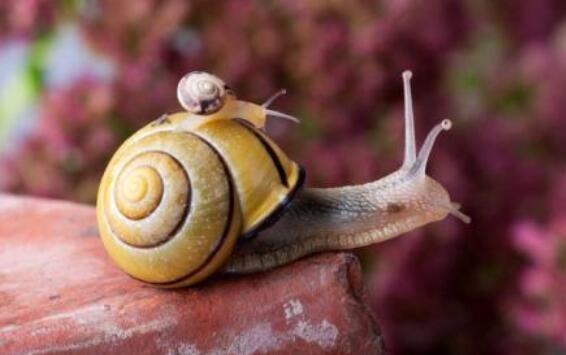 世界上神奇的雌雄同体动物,一生不用寻求配偶