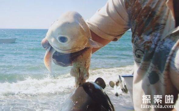 独眼鲨鱼真的存在吗,独眼鲨鱼的真实图片揭秘