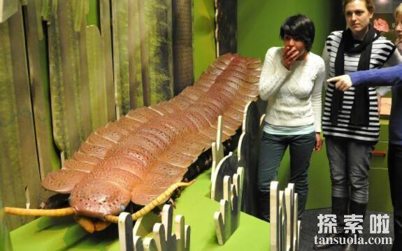 石炭纪十大恐怖生物,巨脉蜻蜓翅膀75厘米(最大昆虫)