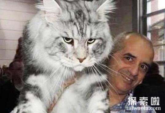 三百公斤重的乌克兰巨猫,真相竟是乌龙事件
