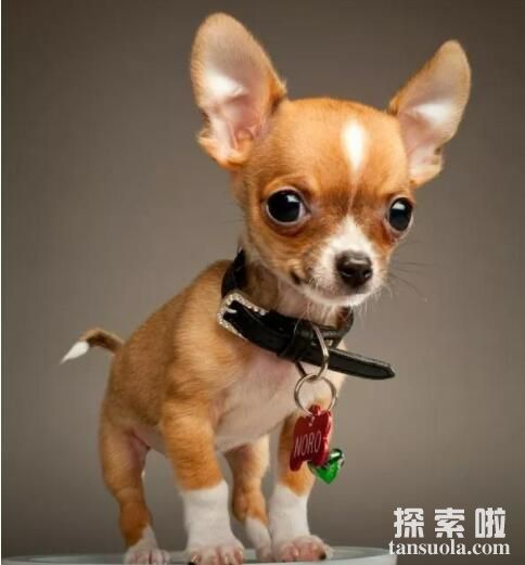 揭秘活的时间最长的犬,狗狗长寿的秘诀竟是主人的爱