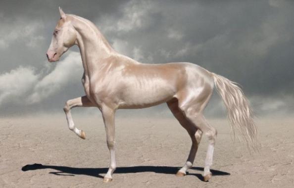 世界十大名马排行,十大最贵的马个个贵如黄金