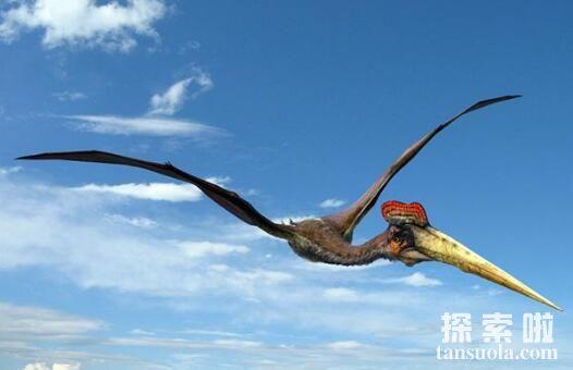 风神翼龙有多大,风神翼龙的资料(多张高清图片)