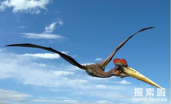 现实中风神翼龙多少米,风神翼龙真的存在吗
