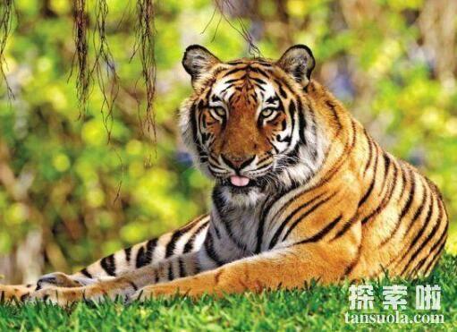 世界十大濒危动物,华南虎不足100头,北部白犀牛仅剩5头