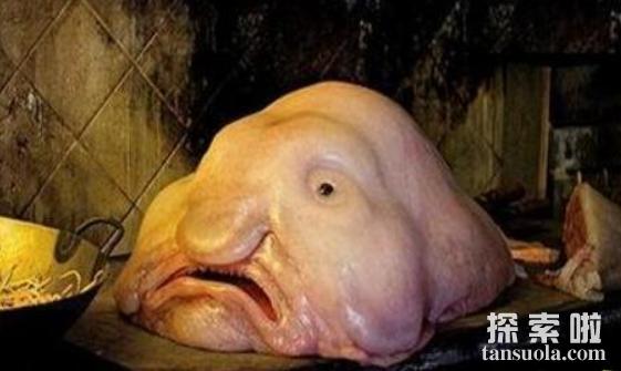 揭秘人面鱼是什么东西,人面鱼真的存在吗