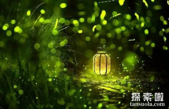为啥萤火虫抓到就死了,为什么不能用手碰萤火虫