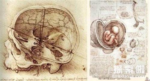 达芬奇的在公元1510年《胚胎研究》